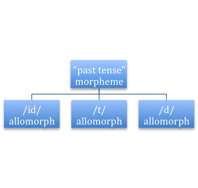 """past tense morpheme The past tense morpheme, """"-ed,"""" for example, is pronounced in three different ways: as [ɪd] after a verb that ends in [d] or [t], as [t] after a verb that ends in an unvoiced consonant, and as [d] after a verb that ends in a voiced consonant."""